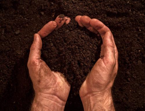 Meststofschema gazon bij arme bodems